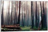 Plexiglas –Bomen met Boomstammen– 60x40 (Wanddecoratie op Plexiglas)