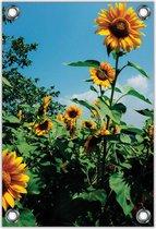 Tuinposter –Zonnebloemenveld– 30x40  Foto op Tuinposter (wanddecoratie voor buiten en binnen)