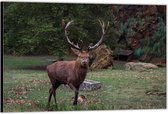 Dibond –Hert tussen de Bomen– 40x30 Foto op Aluminium (Met Ophangsysteem)