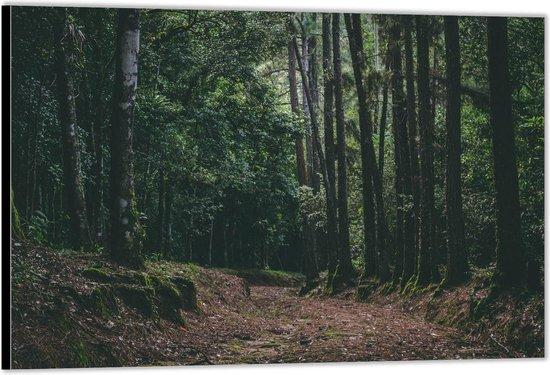 Dibond –Bospaadje langs Bomen– 120x80 Foto op Aluminium (Wanddecoratie van metaal)