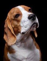 Beagle Notebook