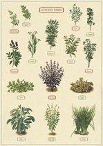 Poster Kruiden - Cavallini & Co - Schoolplaat Herbs