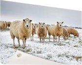 Schapen in een winterlandschap Tuinposter 60x40 cm - klein - Tuindoek / Buitencanvas / Schilderijen voor buiten (tuin decoratie)