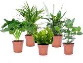 Plant in a Box - Luchtzuiverende kamerplanten - Mix van 5 stuks - Pot ⌀12cm - Hoogte ↕ 25-40cm