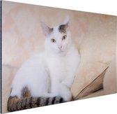 Prachtige kat Aluminium 120x80 cm - Foto print op Aluminium (metaal wanddecoratie)