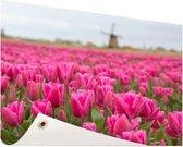 Roze tulpen en windmolen Tuinposter 120x80 cm - Tuindoek / Buitencanvas / Schilderijen voor buiten (tuin decoratie)