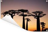 Een silhouet van meerdere Afrikaanse baobab bomen bij zonsondergang Tuinposter 180x120 cm - Tuindoek / Buitencanvas / Schilderijen voor buiten (tuin decoratie) XXL / Groot formaat!
