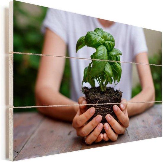 Foto van handen met basilicum plant Vurenhout met planken 30x20 cm - klein - Foto print op Hout (Wanddecoratie)