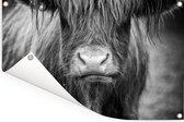 Schotse hooglander kalf zwart wit Tuinposter 90x60 cm - Tuindoek / Buitencanvas / Schilderijen voor buiten (tuin decoratie)