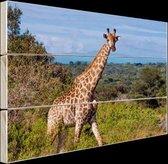 Giraffe in de natuur Hout 60x40 cm - Foto print op Hout (Wanddecoratie)