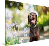 Een Labrador Retriever met mooie bloemen Canvas 180x120 cm - Foto print op Canvas schilderij (Wanddecoratie woonkamer / slaapkamer) / Huisdieren Canvas Schilderijen XXL / Groot formaat!