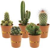 Desertworld Mini Cactussen in terracotta potjes - 5 stuks - Ø 6 cm ↕️ 8-15 cm