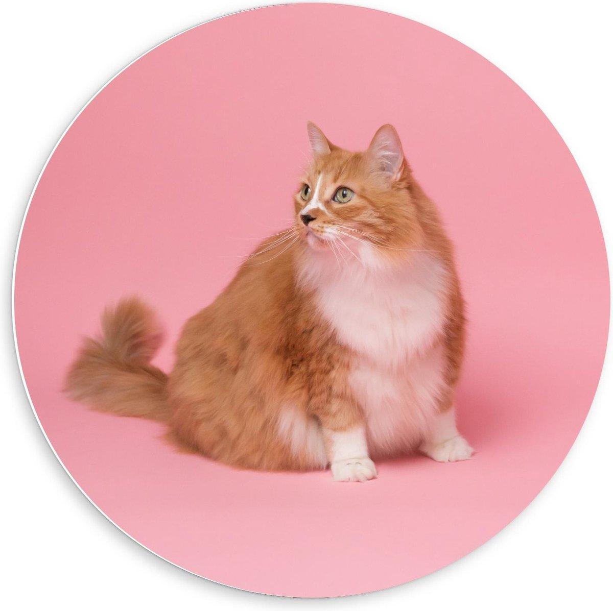 Forex Wandcirkel - Kat op Roze Achtergrond  - 60x60cm Foto op Wandcirkel (met ophangsysteem)
