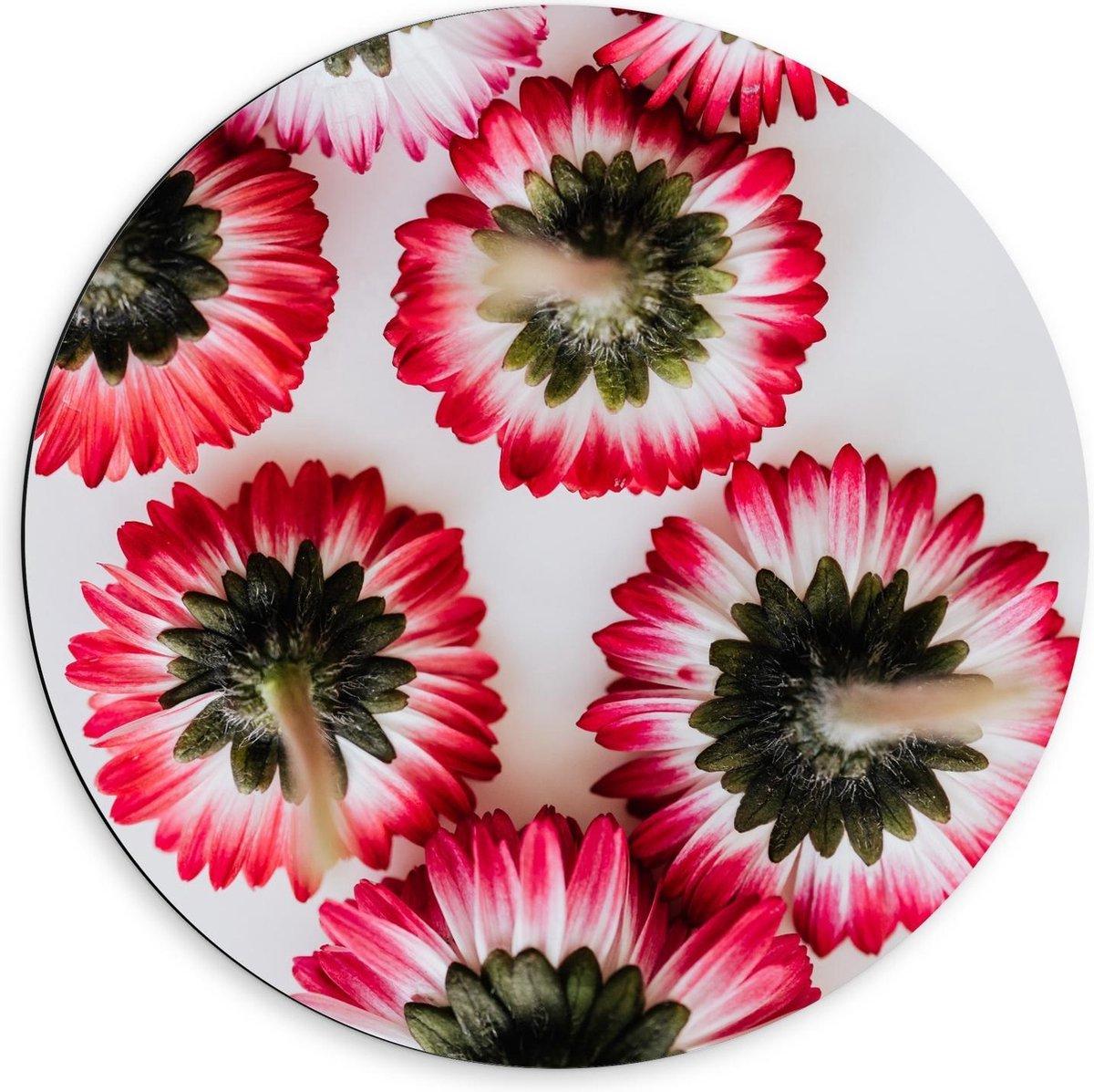 Dibond Wandcirkel - Wit/Roze Bloemetjes Achterkant - 60x60cm Foto op Aluminium Wandcirkel (met ophangsysteem)