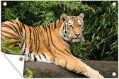 Siberische tijger op een tak tuinposter los doek 180x120 cm - Tuindoek / Buitencanvas / Schilderijen voor buiten (tuin decoratie) XXL / Groot formaat!