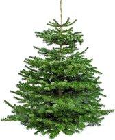 Echte Nordmann Kerstboom - ↕ 120-145 cm - Gezaagd Zonder Kluit
