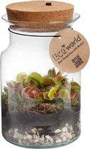 Ecoworld Swamp Corky Glas - Ecosysteem met Vleesetende plant - Venus Vliegenval - met Lamp - Ø 13 cm - Hoogte 20 cm