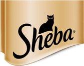 Sheba Kattenwinkel