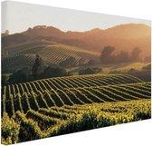 Wijngaarden in de Verenigde Staten Canvas 60x40 cm - Foto print op Canvas schilderij (Wanddecoratie woonkamer / slaapkamer)