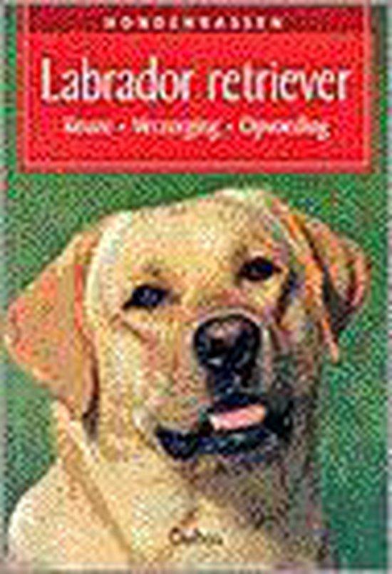 Hondenrassen 6. Labrador retriever - U. Birr |