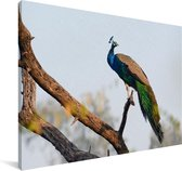 Blauwe pauw in een boom Canvas 30x20 cm - klein - Foto print op Canvas schilderij (Wanddecoratie woonkamer / slaapkamer)
