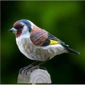 Houten vogel - putter / distelvink