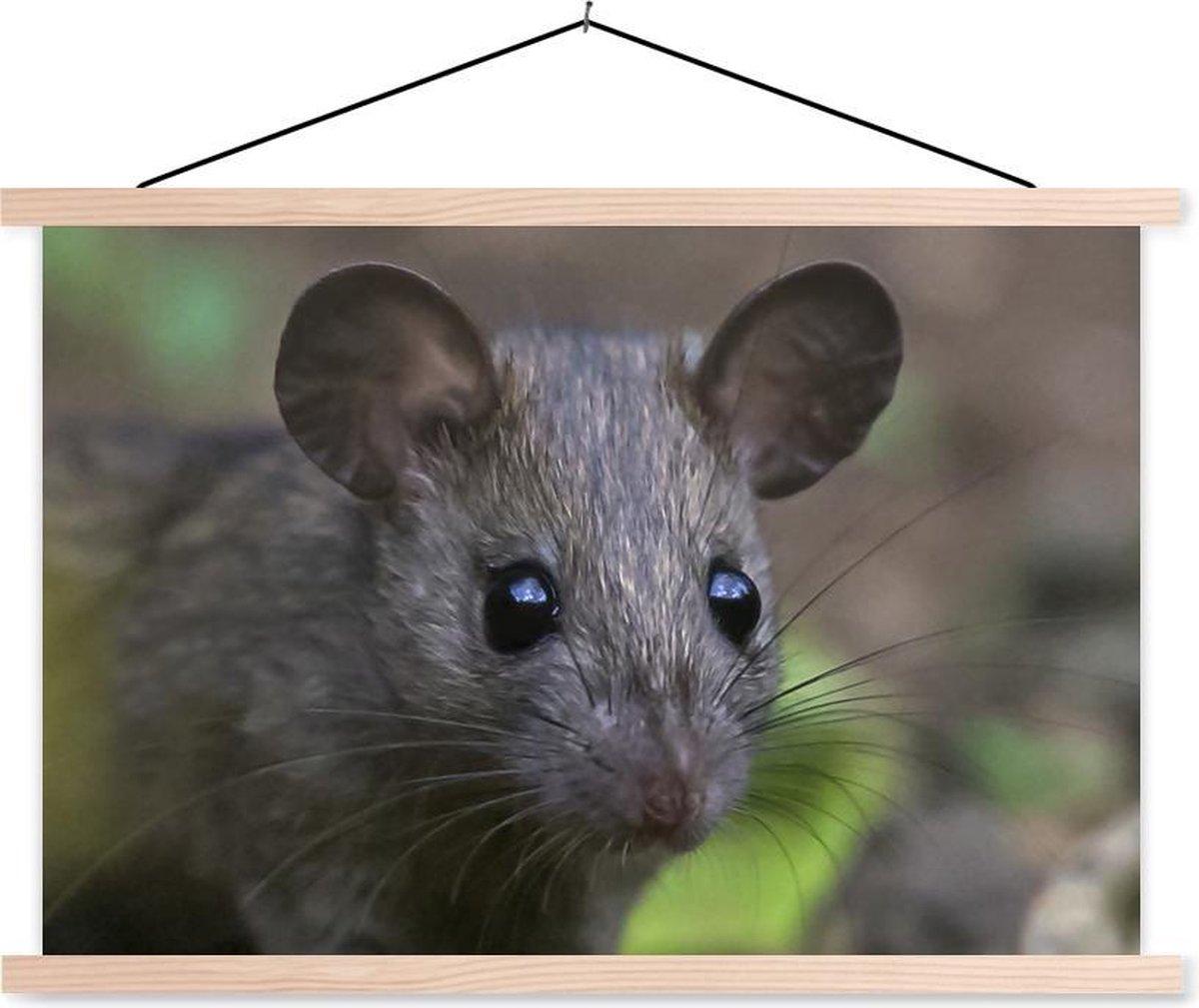 Portretfoto rat in de natuur textielposter latten blank 150x100 cm - Foto print op schoolplaat (wanddecoratie woonkamer/slaapkamer)