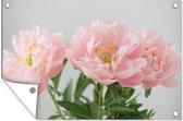 Boeket van roze pioenrozen Tuinposter 60x40 cm - klein - Tuindoek / Buitencanvas / Schilderijen voor buiten (tuin decoratie)