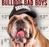 Bulldog Bad Boys 2021 Mini Wall Calendar (Dog Breed Calendar)