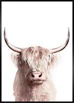 Schotse Hooglander Poster - A3 Dieren Poster 29x42cm