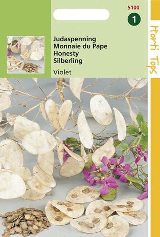 Judaspenning Bloemzaad - Lunaria Annua - Violet