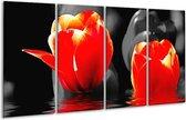 Glasschilderij Tulpen | Rood, Zwart, Grijs | 160x80cm 4Luik | Foto print op Glas |  F002894