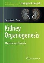 Kidney Organogenesis