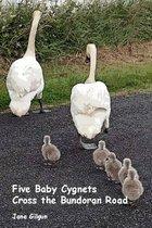 Five Baby Cygnets Cross the Bundoran Road