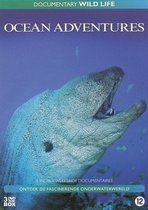 Wild Life Ocean Adventures