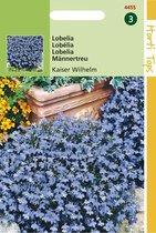 Hortitops Zaden - Lobelia Erinus Comp. Kaiser Wilhelm