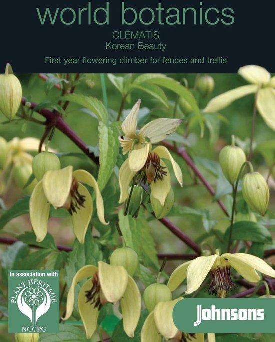 Botanics Clematis Chiisanensis Korean B