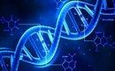 Il DNA, la prova certa?: biologia molecolare e processo penale trattati in maniera semplice