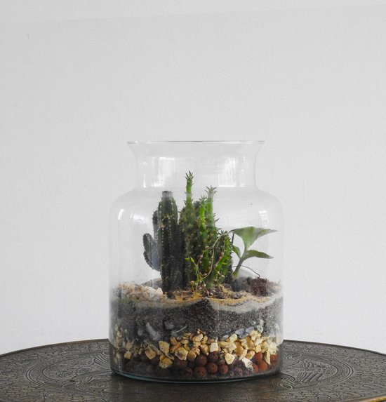 Botame DIY Duurzaam Terrarium Ecosysteem - Cactus - Austrocylindropuntia Subulata - Isalo