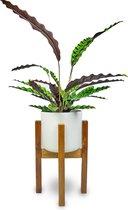 JoFlow Standaard voor Bloempot - Plantenstandaard – Plantenkruk – Uitschuifbare Plantenhouder voor Binnen – 40 KG Draaggewicht van Acacia Hout
