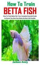 How to Train Betta Fish: How To Train Betta Fish