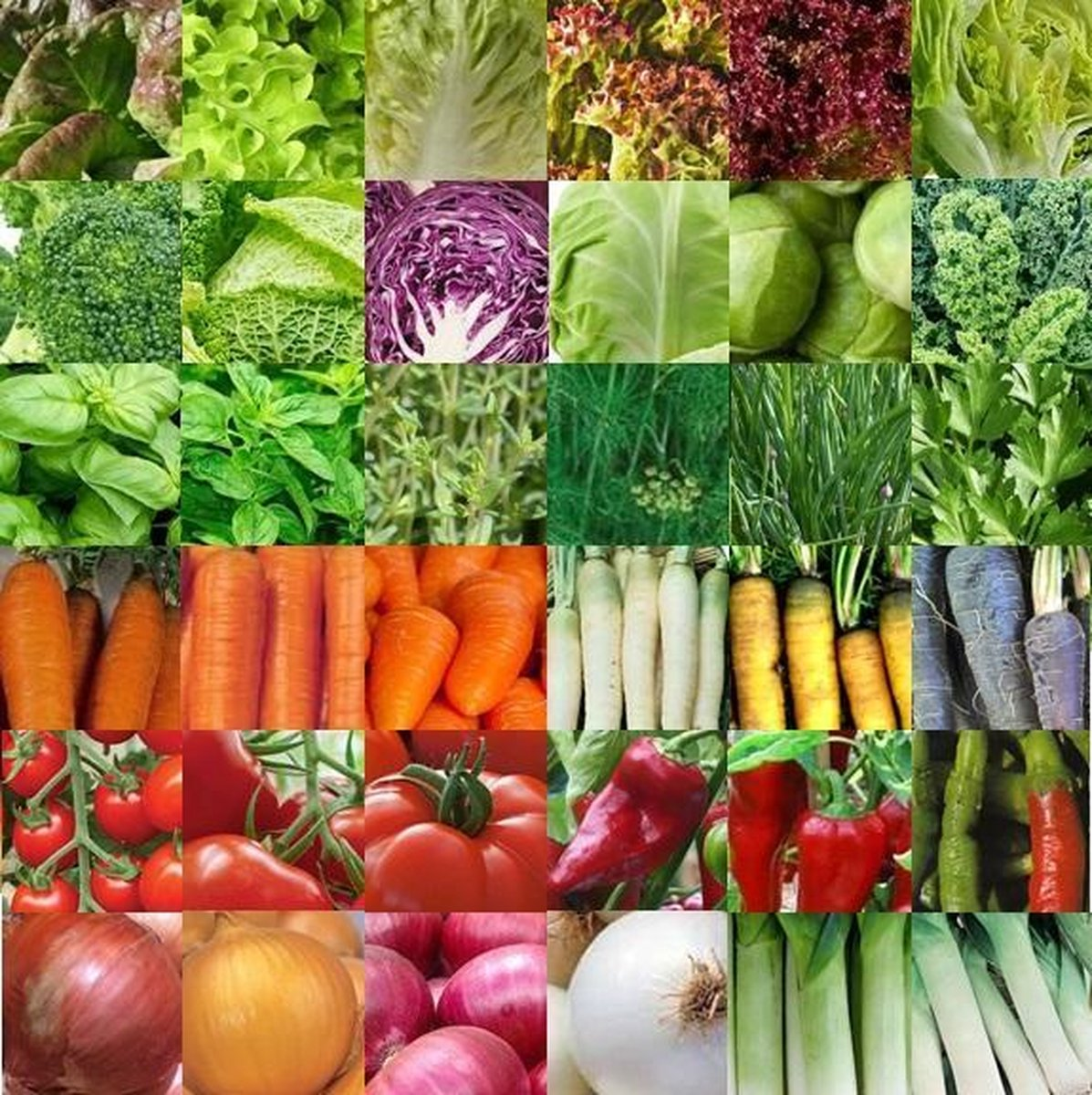 Groentezaden assortiment 36 soorten (sla, kolen, kruiden, wortels, tomaten, paprika, uien, prei) zaa