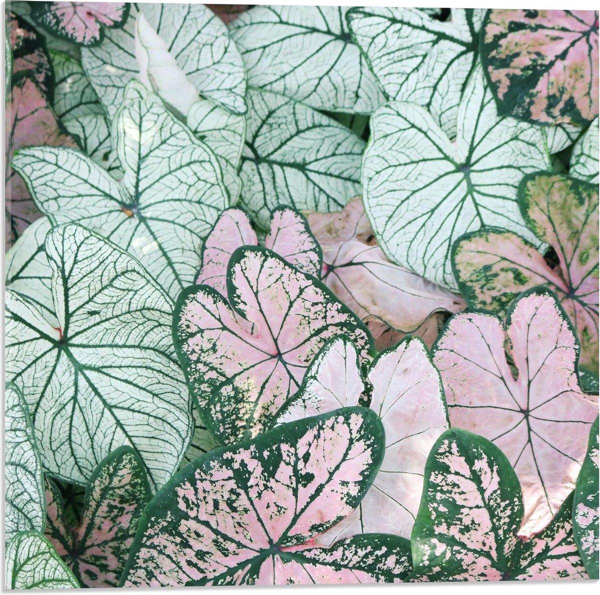 Plexiglas - Gekleurde Lelies - 50x50cm Foto op Plexiglas (Wanddecoratie op Plexiglas)