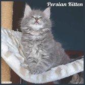 Persian Kitten 2021 Wall Calendar