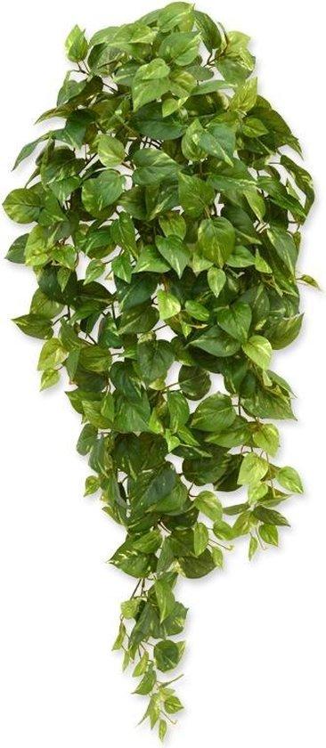 Maxifleur - Scindapsus hangplant 100 cm bont
