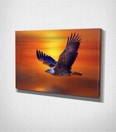 Eagle Canvas | 70x100 cm