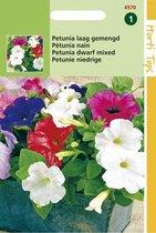 Petunia Hybride Bloemzaad - Gemengd