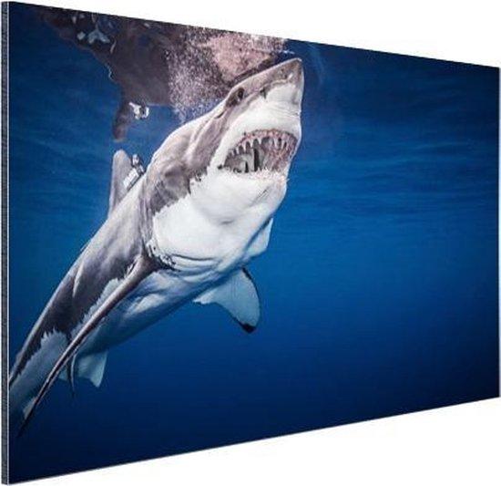 Mensenhaai Aluminium 60x40 cm - Foto print op Aluminium (metaal wanddecoratie)