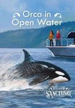 Orca in Open Water