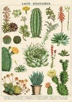 Poster Cactus - Cavallini & Co - Schoolplaat Cacti & Succulent